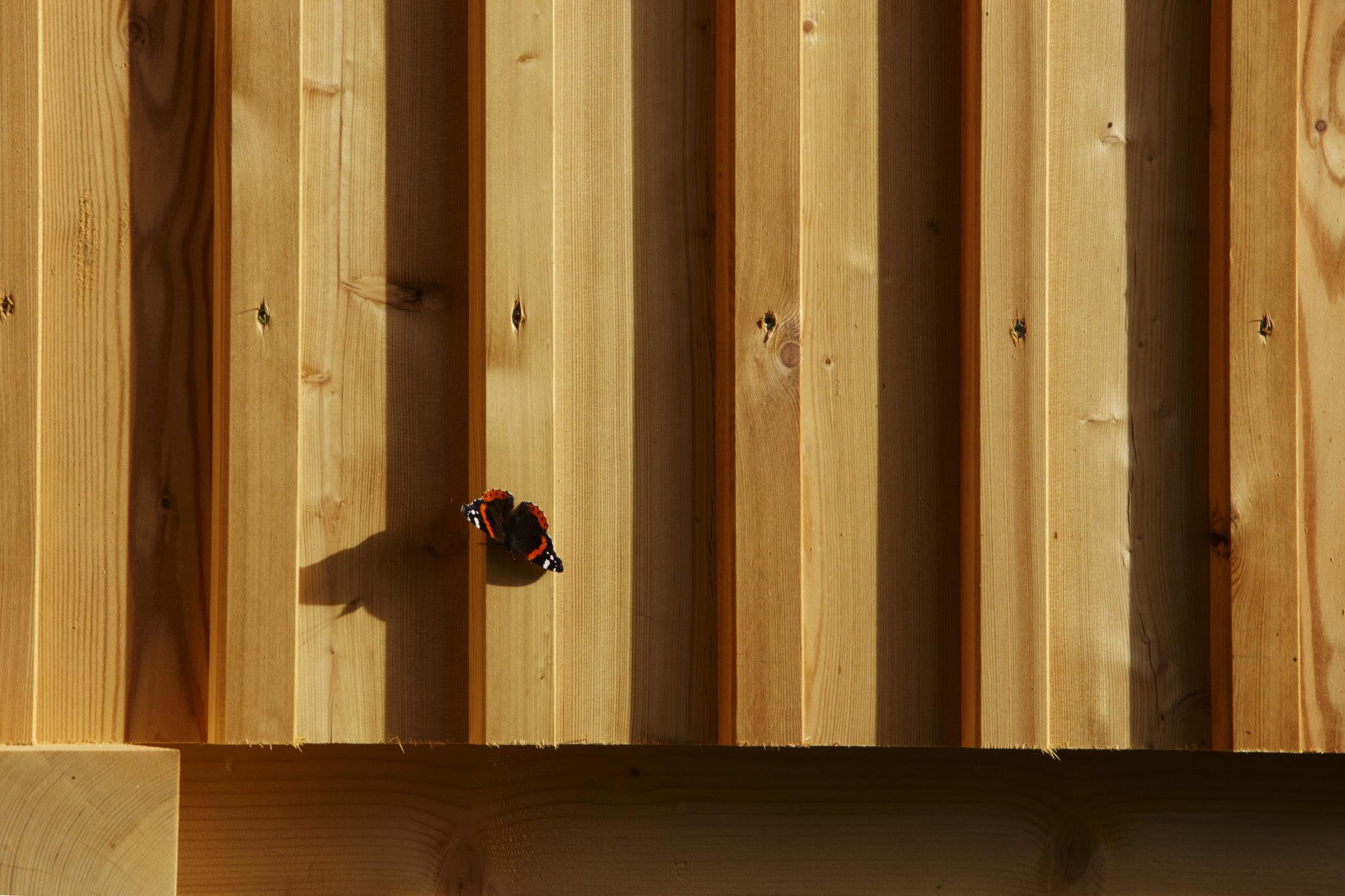 Holz, Schmetterling, Werbefoto,